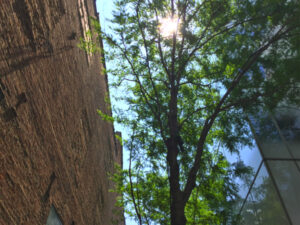 Tree Photography: it's even possible in New York City – by Amy Horton